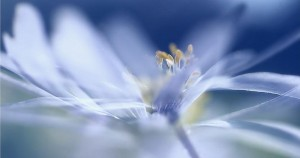 petali di fiore 300x158