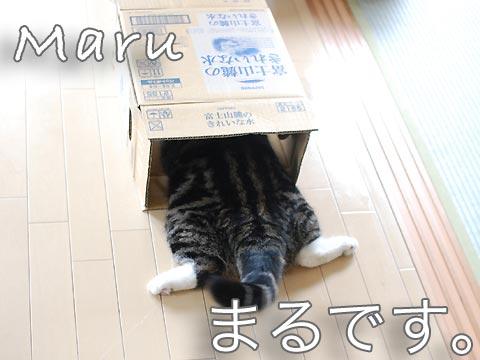 maru scatola
