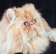 article page main ehow images a08 7t 22 hair knots out longhaired cats 800x800