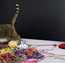 Linguaggio del corpo di un gatto con la coda ritta e punta for La coda del gatto