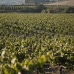 wine soil types 1.1 800x8001 150x150