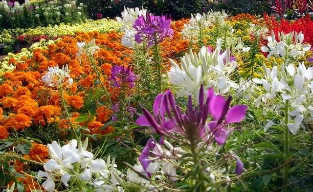 I fiori in un giardino brillano come le stelle del cielo for Giardino fiorito