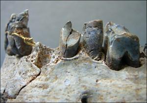 dentures zoom1 300x211