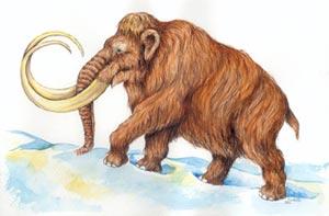 mammut mls1