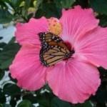 giardino per farfalle2 150x150