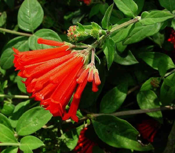 I fiori per un matrimonio a dicembre for Fiori bianchi profumati a grappolo