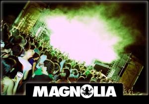 magnolia 300x209