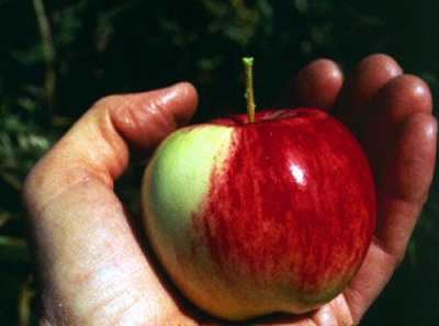 What Is The Nutritional Value Of An Apple1