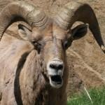 goat whey nutritional analysis 800x800 150x150