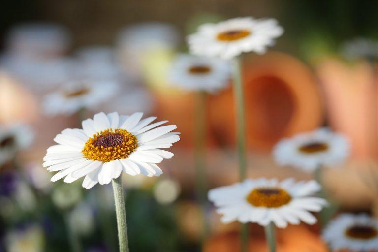 nomi dei fiori