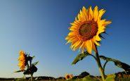 Quali fiori piantare a Giugno