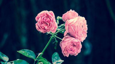 Nomi dei fiori pi comuni for Nomi dei gemelli diversi