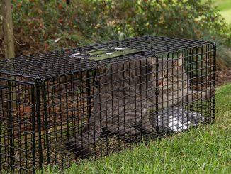 trappola per gatti