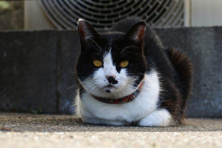 catturare un gatto