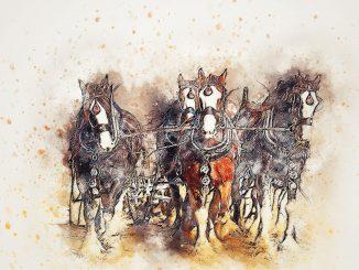 disegnare un cavallo astratto