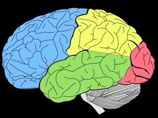 temporale, frontale, occipitale, parietale, insula