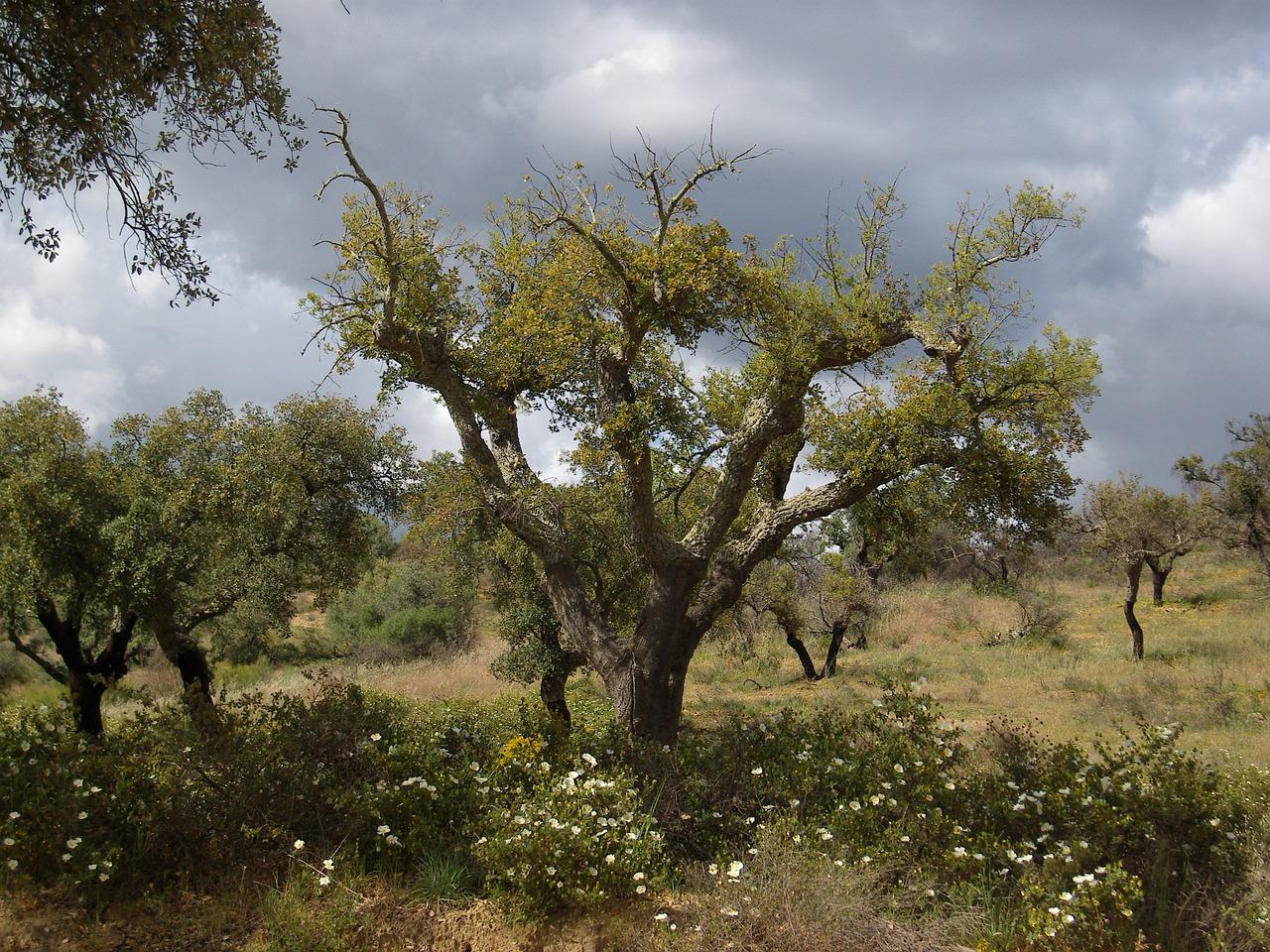 Foreste di sughero di Alentejo