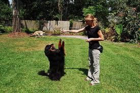 addestrare un cane giocando