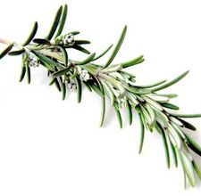 article page main ehow images a04 k4 qd store fresh rosemary 800x800