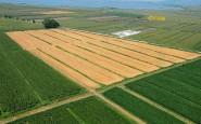 attivita agricole 04 185x115