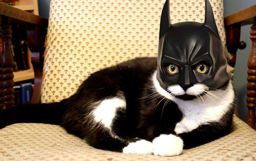 batman mask for cats