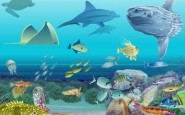 ecosistema marino tierra1 185x115