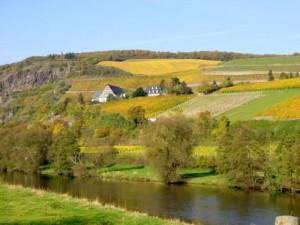 nahe riesling vineyard in german white wine 300x225