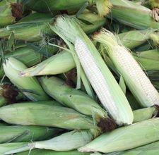 article page main ehow images a07 bi 8h store corn cob husk 800x800