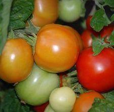 article page main ehow images a06 7u bp tomato mozzarella salad 800x800