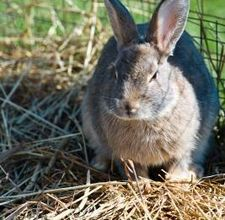 article page main ehow images a07 tk eo keep rabbit out yard 800x800