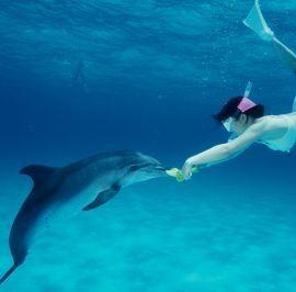 ti piacerebbe nuotare con i delfini sempre pi persone sognano di poter nuotare con i delfini man mano che la lintelliegnza e la personalit dei delfini