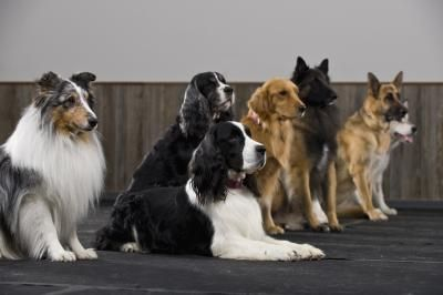 article new ehow images a04 ks d4 detangler dog hair 800x800