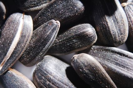 article new ehow images a05 tn 9d roast sunflower seeds shell 800x800