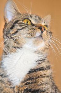 article new ehow images a06 aq 77 homemade natural flea killer cats 800x8002