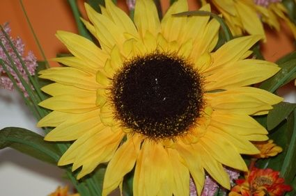 article new ehow images a06 sh 9r dehull sunflower seeds 800x800