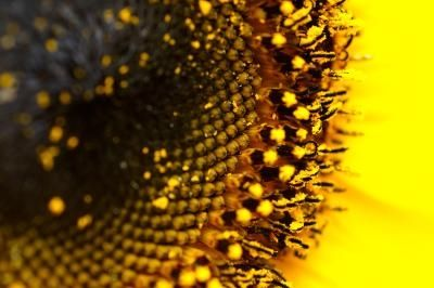 article new ehow images a07 ba 7g gather sunflower seeds 800x800