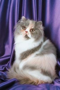 article new ehow images a08 7n is remove tangles longhaired cats 800x800