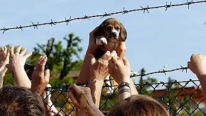 Montichiari (BS), blitz all'allevamento dei beagle: dodici arresti e quattro feriti