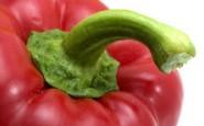 lib Peppers 005a1 185x115