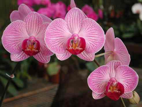 Come piantare le orchidee - Come curare un orchidea in casa ...