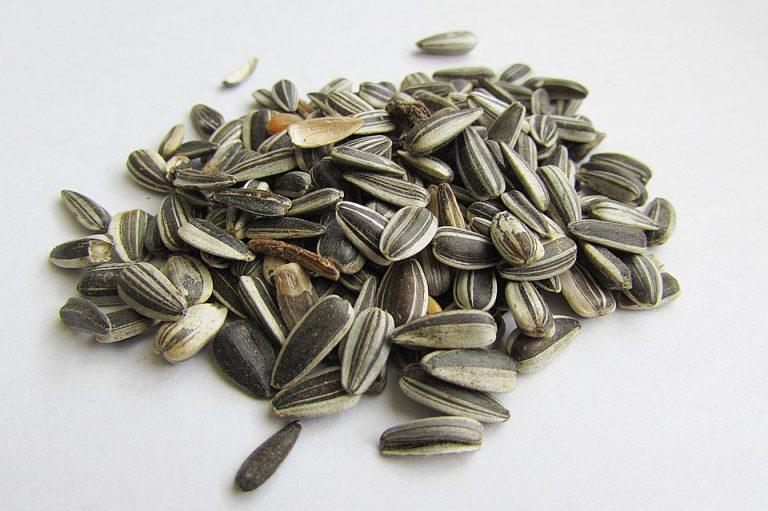 semi di girasole - tostati - istruzioni