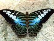 foto farfalle 2 175x135