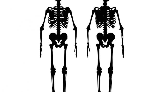 coccige scheletro