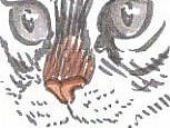 draw cats nose 1.3 800x800 153x115