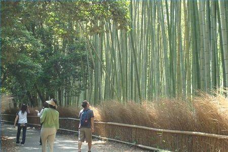 Istruzioni per la coltivazione del bamb guide di for Bamboo coltivazione