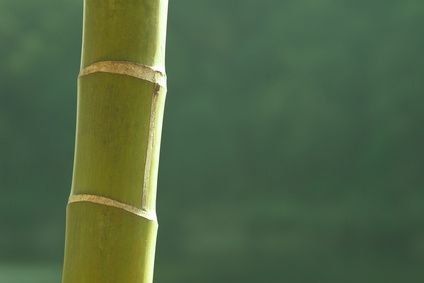 article new ehow images a06 oo a6 stop bamboo growing 800x800