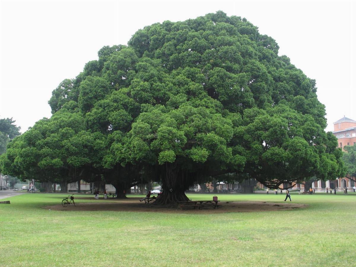 alberi monumentali O2