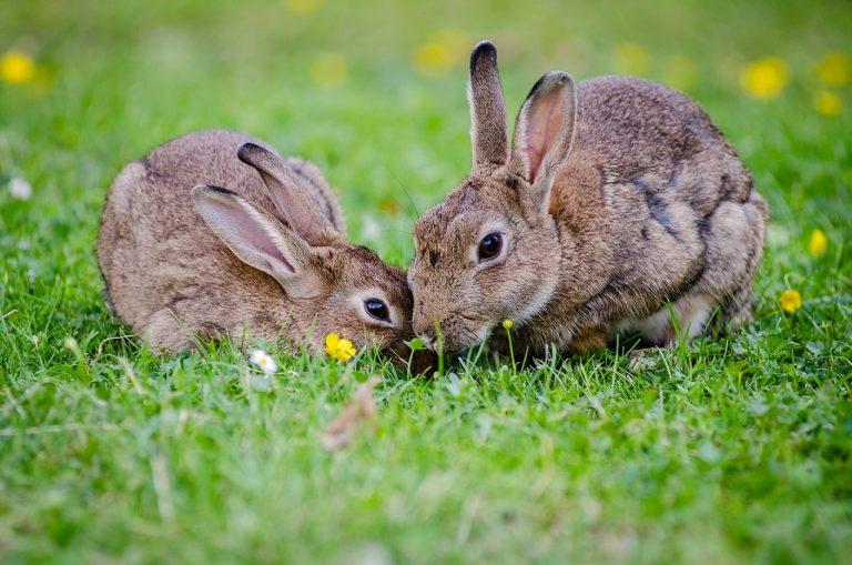 raffreddore nel coniglio