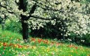 primavera 185x115