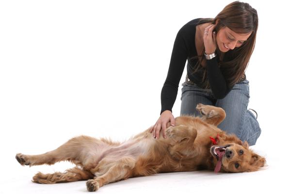 relax yoga dog
